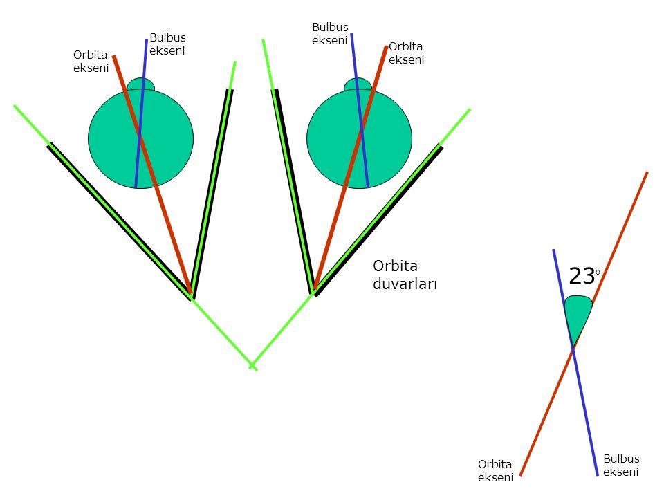 Bulbus ekseni Orbita ekseni 23O Orbita ekseni Bulbus Orbita duvarları