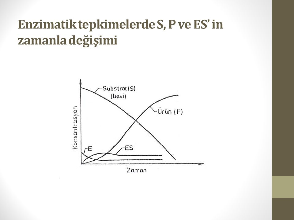 Enzimatik tepkimelerde S, P ve ES' in zamanla değişimi