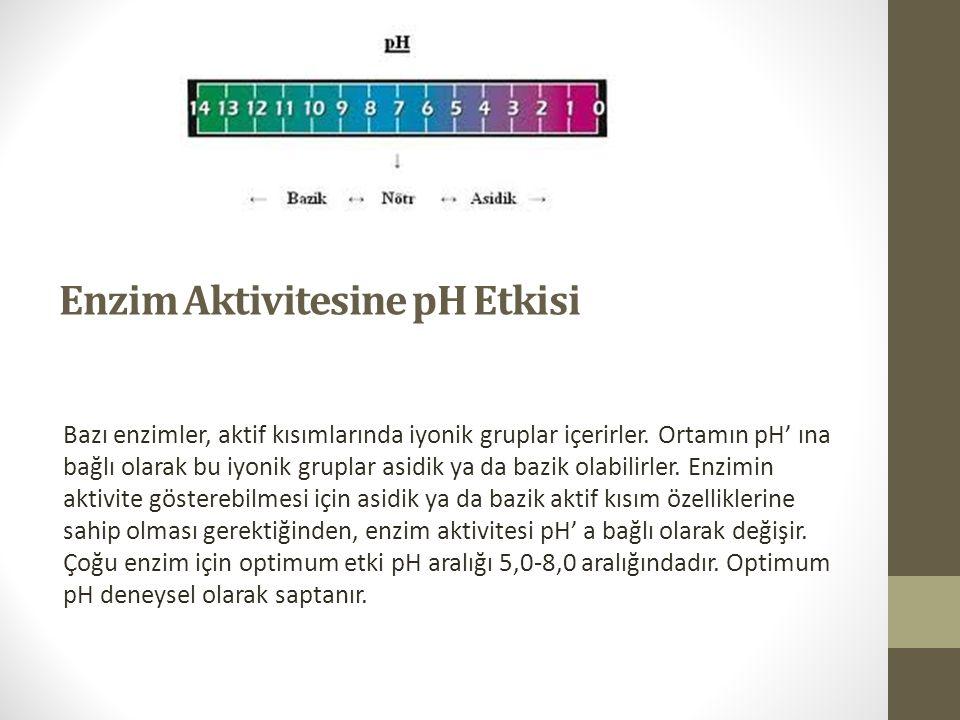 Enzim Aktivitesine pH Etkisi