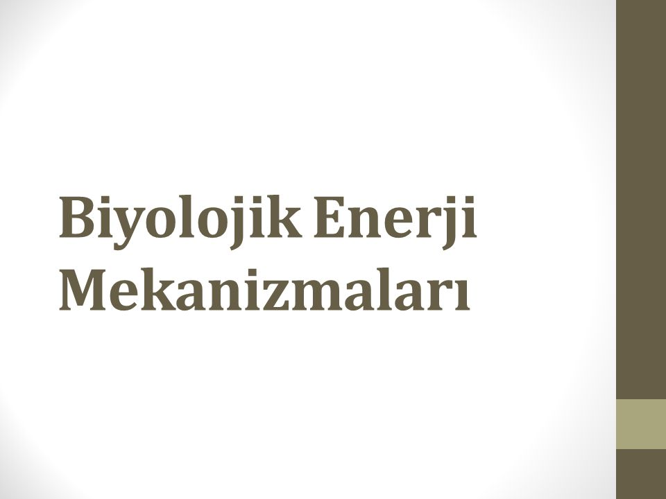 Biyolojik Enerji Mekanizmaları