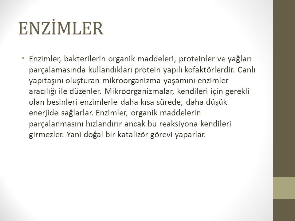 ENZİMLER