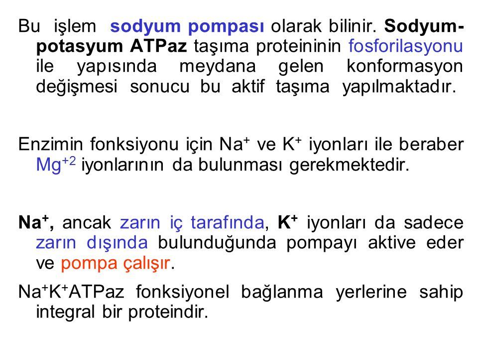 Bu işlem sodyum pompası olarak bilinir