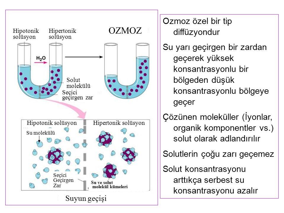 OZMOZ Ozmoz özel bir tip diffüzyondur