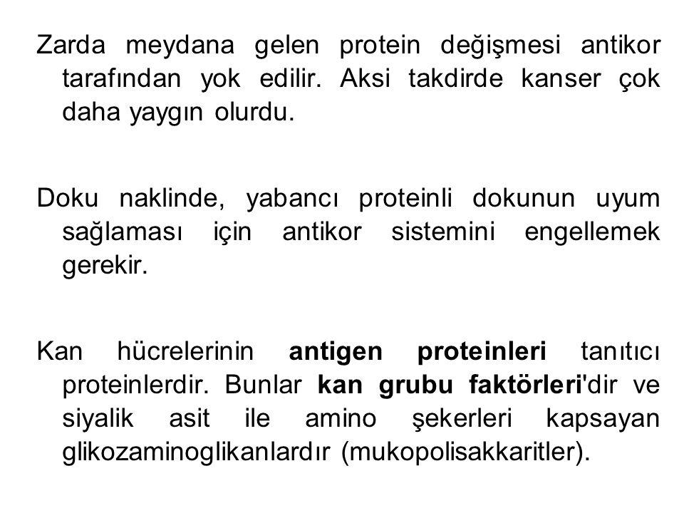 Zarda meydana gelen protein değişmesi antikor tarafından yok edilir