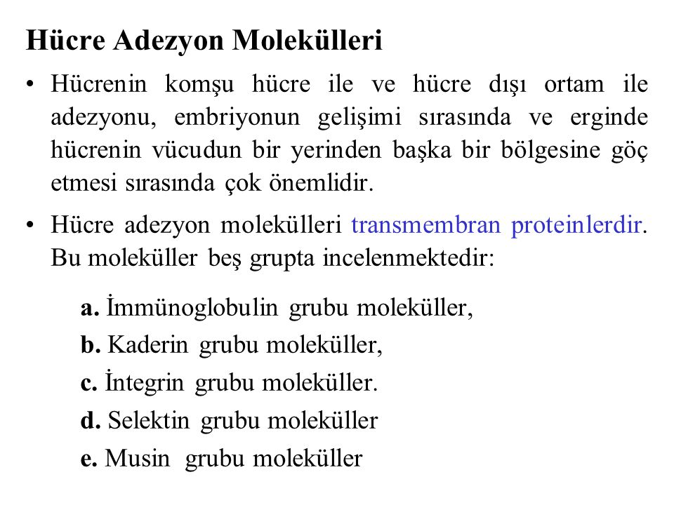 Hücre Adezyon Molekülleri
