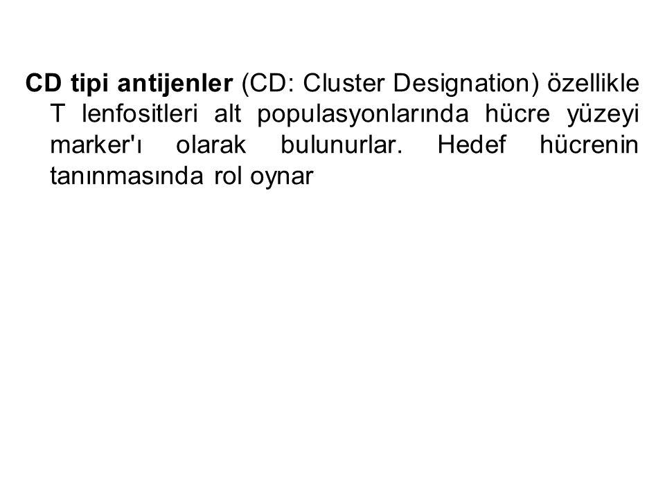 CD tipi antijenler (CD: Cluster Designation) özellikle T lenfositleri alt populasyonlarında hücre yüzeyi marker ı olarak bulunurlar.