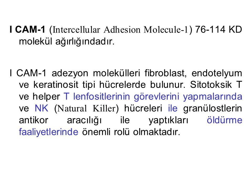 I CAM-1 (Intercellular Adhesion Molecule-1) 76-114 KD molekül ağırlığındadır.