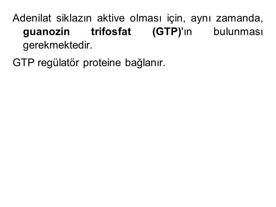 Adenilat siklazın aktive olması için, aynı zamanda, guanozin trifosfat (GTP) ın bulunması gerekmektedir.