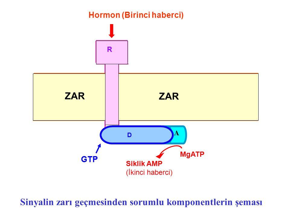 Sinyalin zarı geçmesinden sorumlu komponentlerin şeması