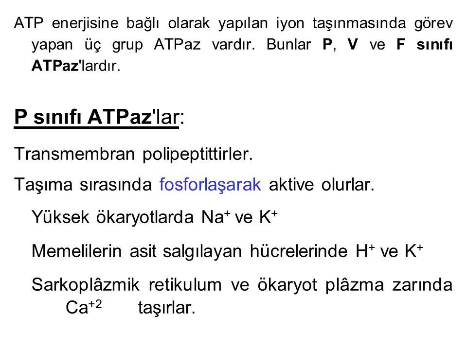 P sınıfı ATPaz lar: Transmembran polipeptittirler.