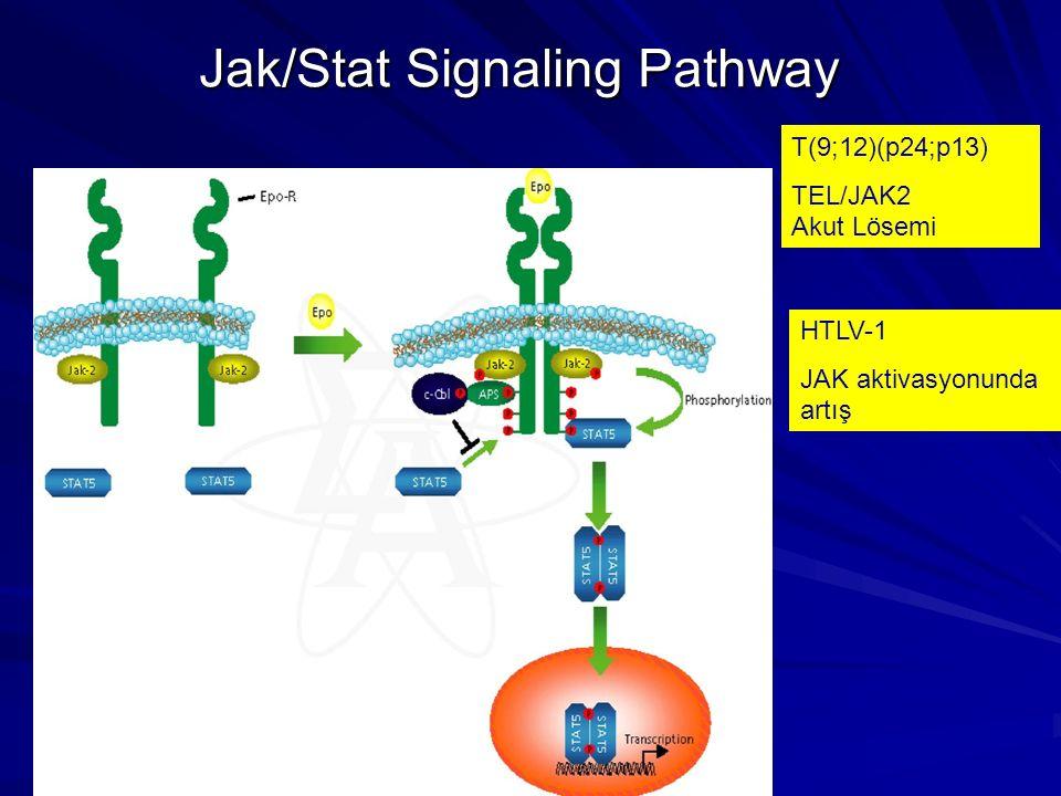 Jak/Stat Signaling Pathway