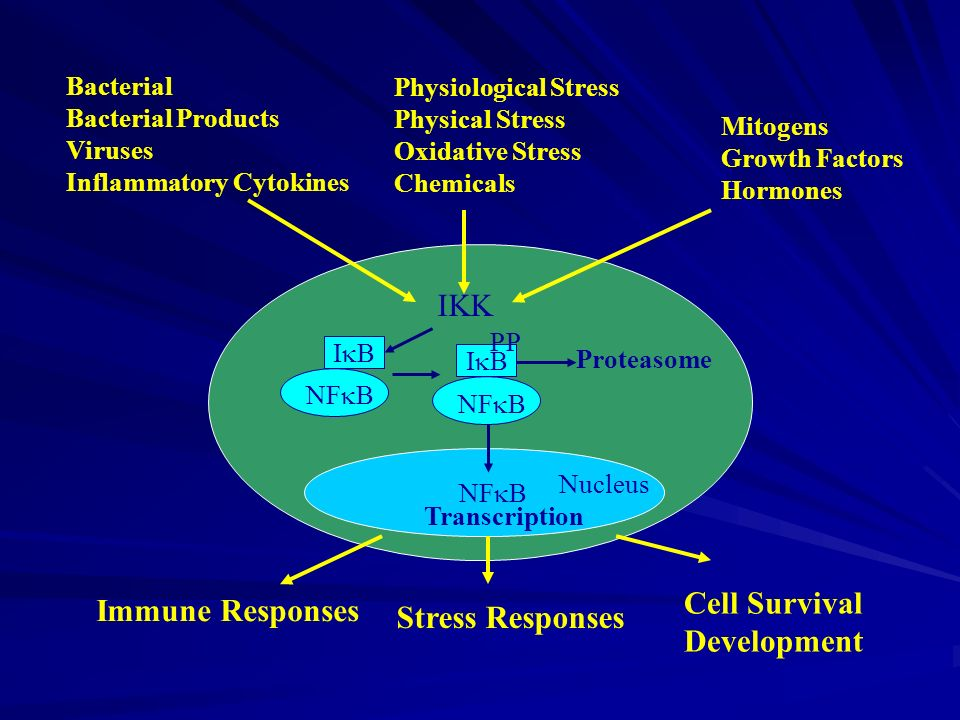 IKK Cell Survival Immune Responses Stress Responses Development
