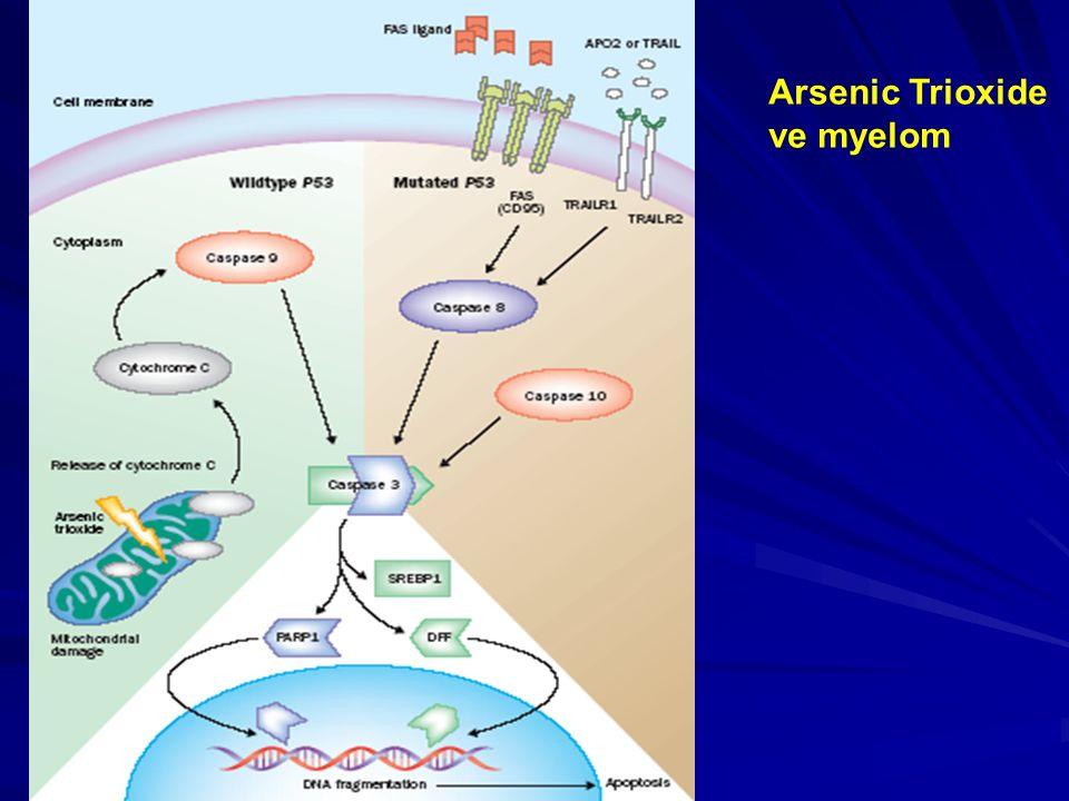 Arsenic Trioxide ve myelom