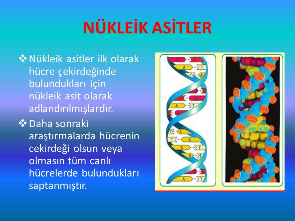 NÜKLEİK ASİTLER Nükleik asitler ilk olarak hücre çekirdeğinde bulundukları için nükleik asit olarak adlandırılmışlardır.
