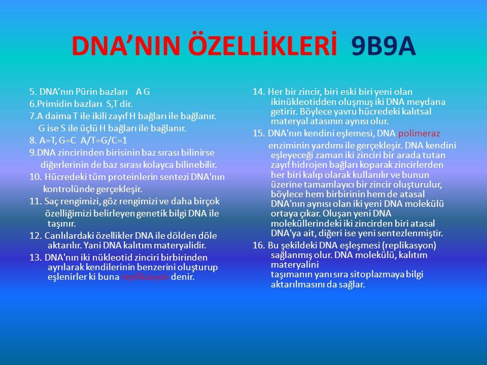 DNA'NIN ÖZELLİKLERİ 9B9A