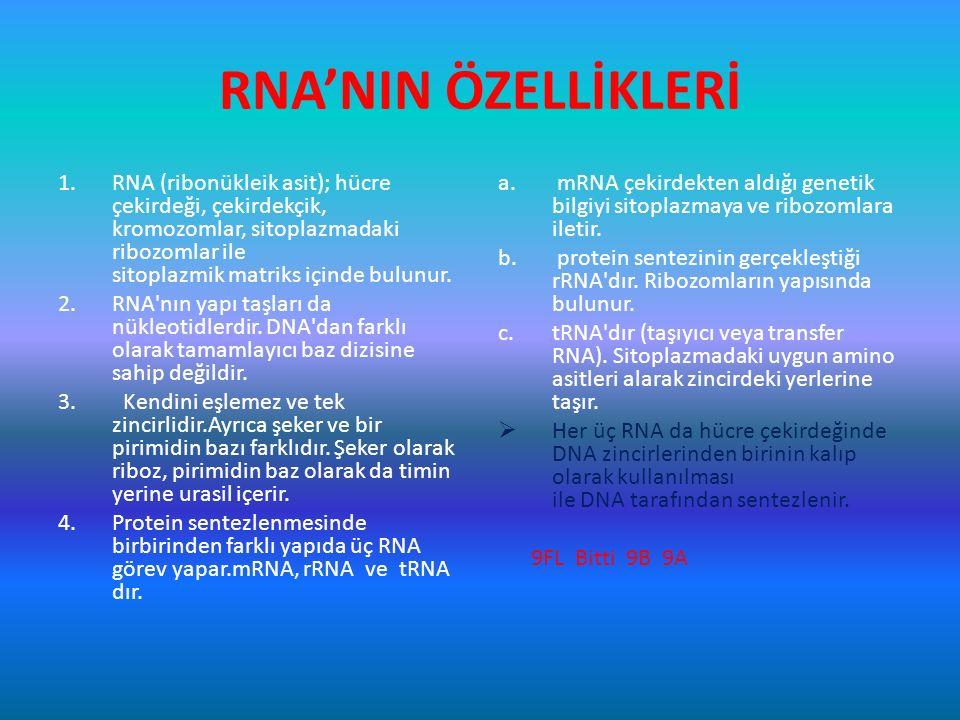RNA'NIN ÖZELLİKLERİ