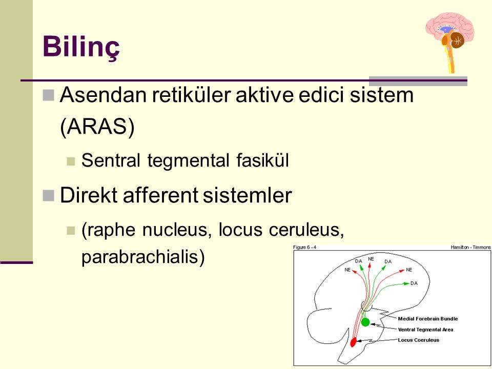 Bilinç Asendan retiküler aktive edici sistem (ARAS)