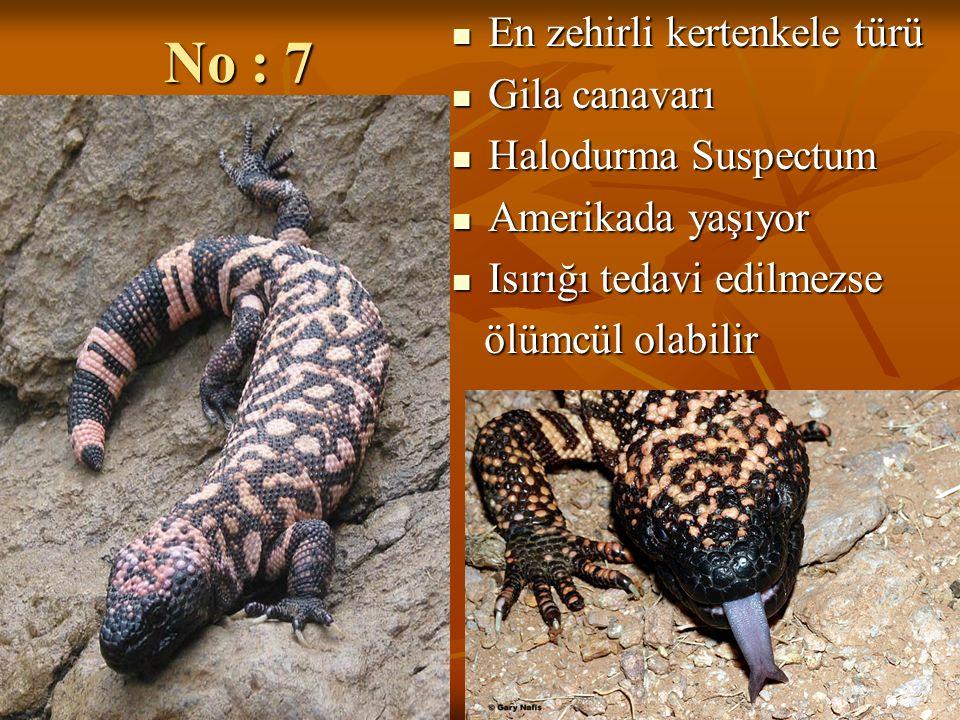 No : 7 En zehirli kertenkele türü Gila canavarı Halodurma Suspectum