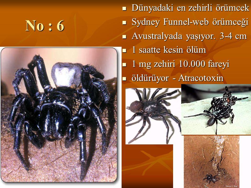 No : 6 Dünyadaki en zehirli örümcek Sydney Funnel-web örümceği