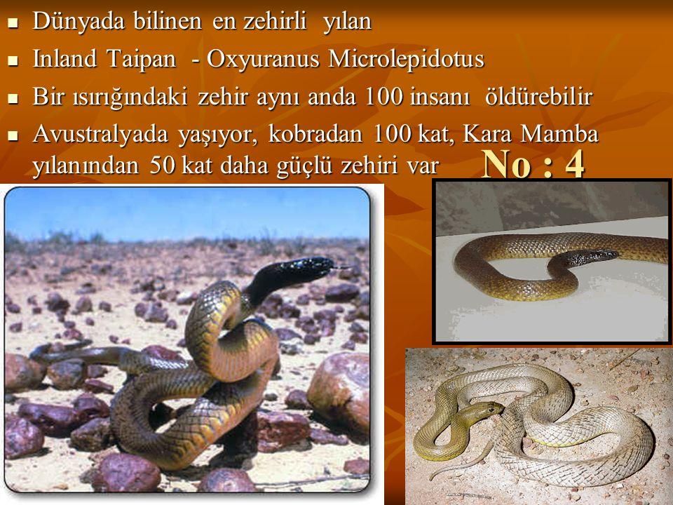 No : 4 Dünyada bilinen en zehirli yılan