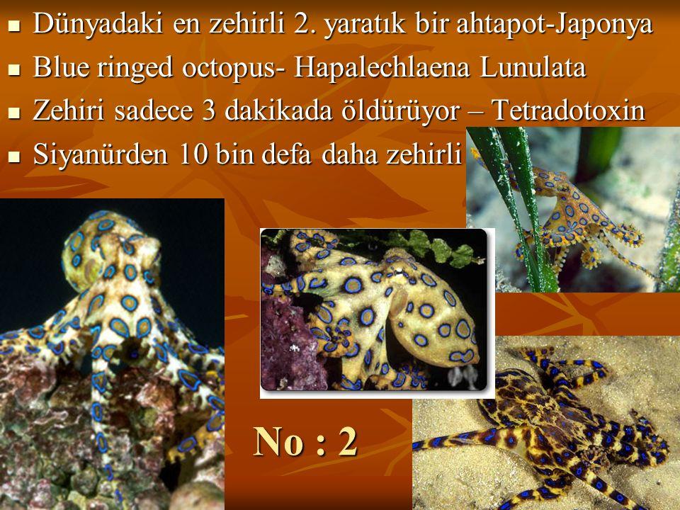 No : 2 Dünyadaki en zehirli 2. yaratık bir ahtapot-Japonya