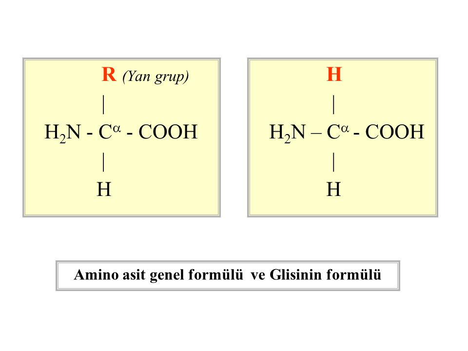 Amino asit genel formülü ve Glisinin formülü