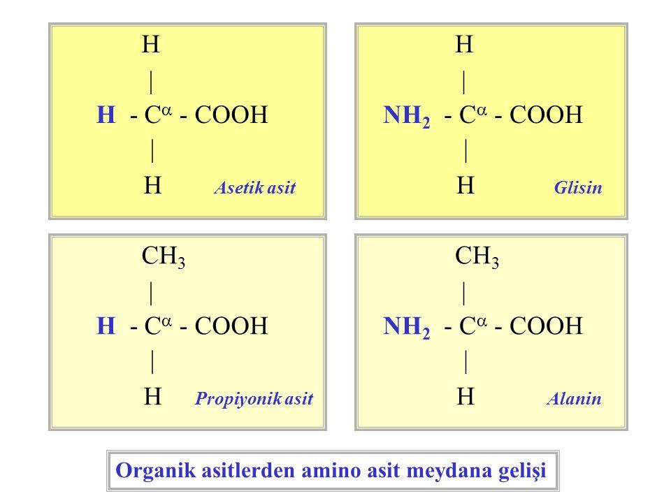 H | H - Ca - COOH H Asetik asit H | NH2 - Ca - COOH H Glisin CH3 |