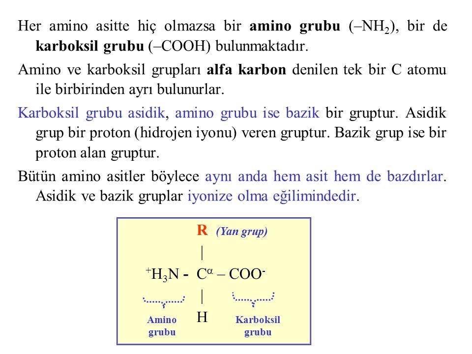 Her amino asitte hiç olmazsa bir amino grubu (–NH2), bir de karboksil grubu (–COOH) bulunmaktadır.
