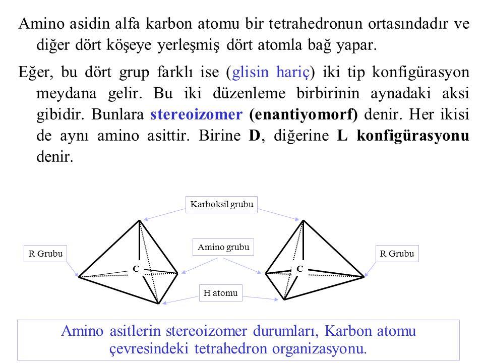Amino asidin alfa karbon atomu bir tetrahedronun ortasındadır ve diğer dört köşeye yerleşmiş dört atomla bağ yapar.