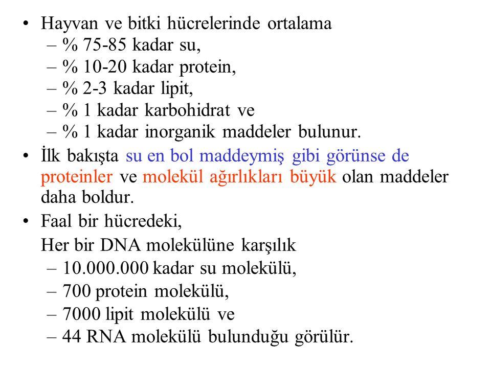Hayvan ve bitki hücrelerinde ortalama