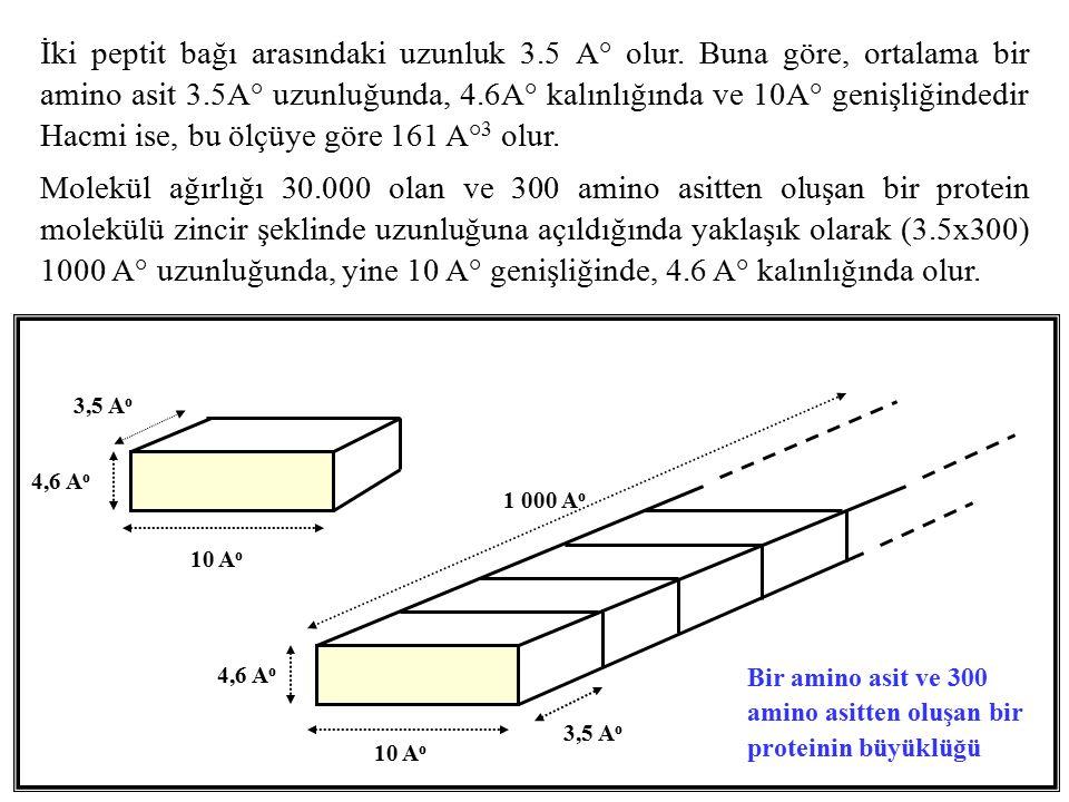 İki peptit bağı arasındaki uzunluk 3. 5 A° olur