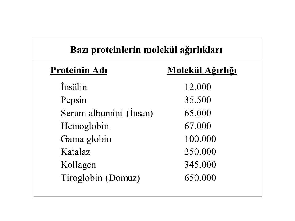 Tablo Bazı proteinlerin molekül ağırlıkları