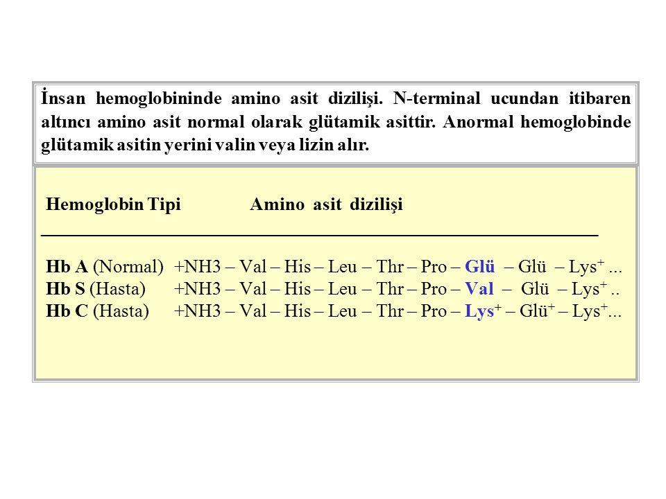 İnsan hemoglobininde amino asit dizilişi
