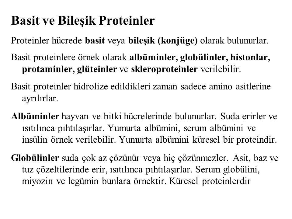 Basit ve Bileşik Proteinler