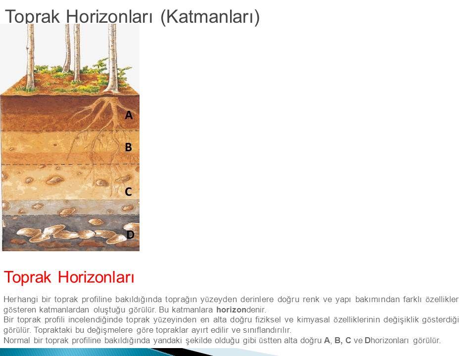 Toprak Horizonları (Katmanları)