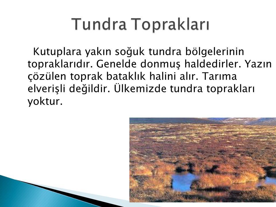 Tundra Toprakları