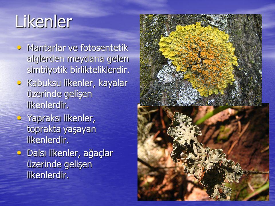 Likenler Mantarlar ve fotosentetik alglerden meydana gelen simbiyotik birlikteliklerdir. Kabuksu likenler, kayalar üzerinde gelişen likenlerdir.