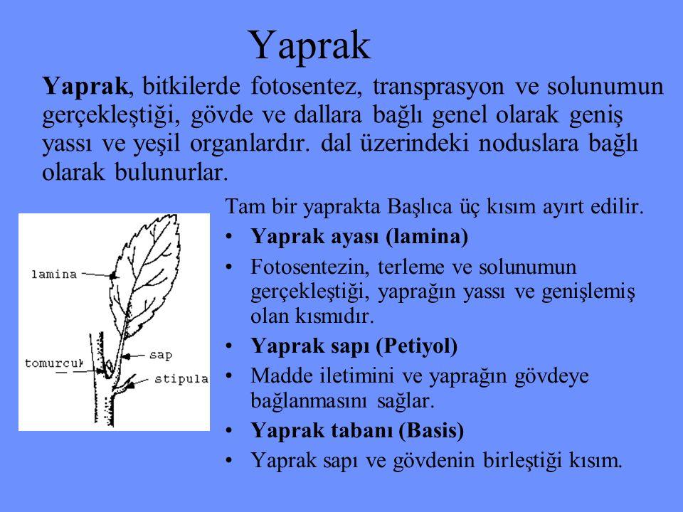 Yaprak
