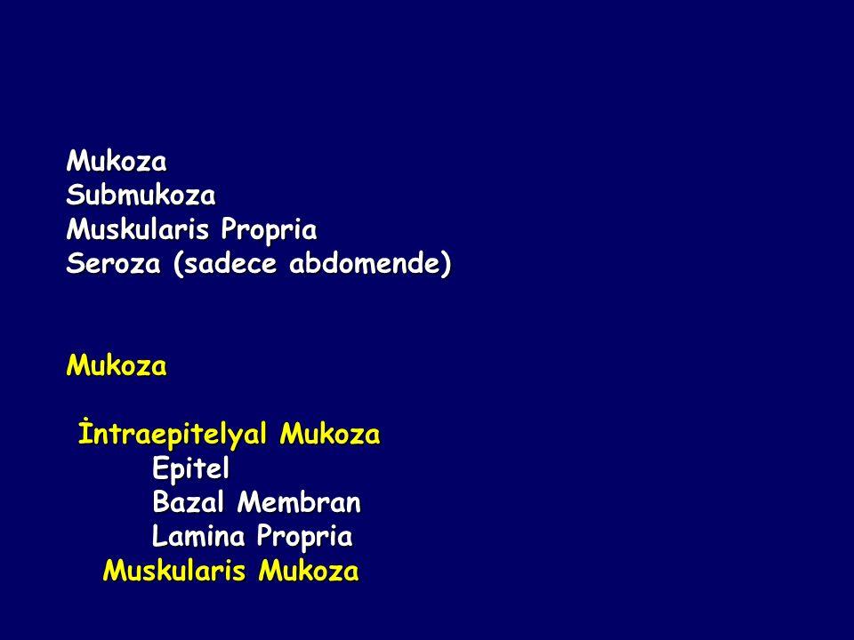 Mukoza Submukoza. Muskularis Propria. Seroza (sadece abdomende) İntraepitelyal Mukoza. Epitel. Bazal Membran.