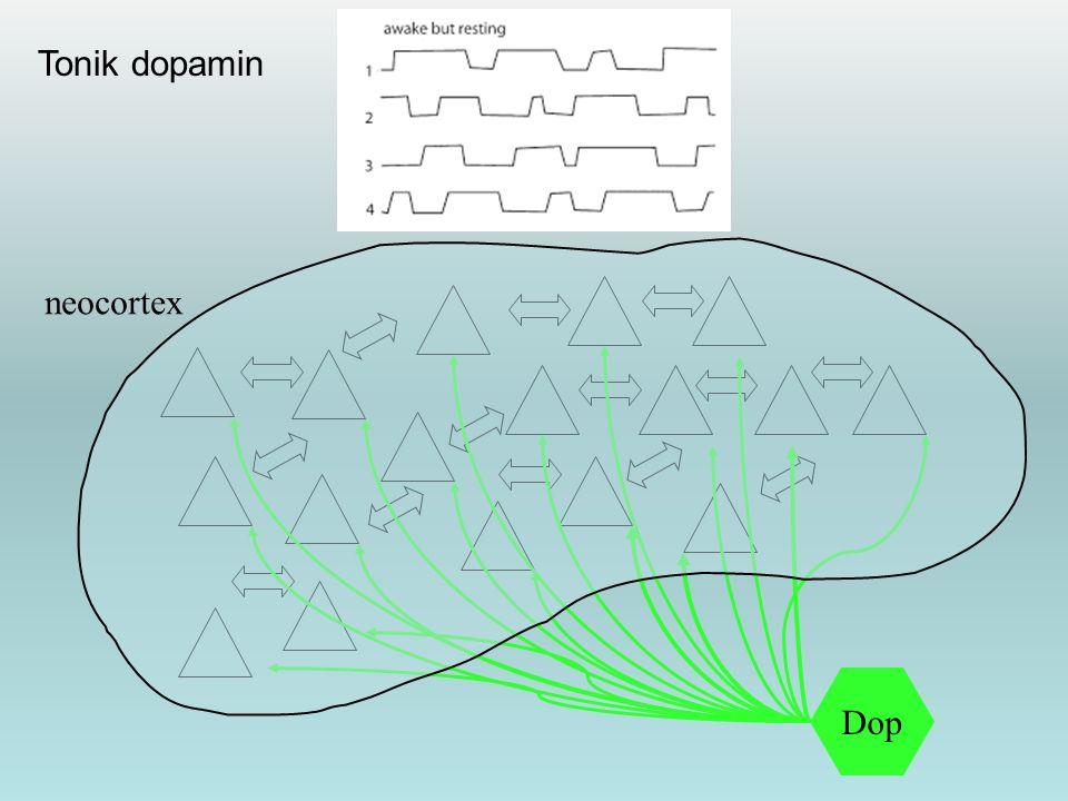 Tonik dopamin neocortex Dop