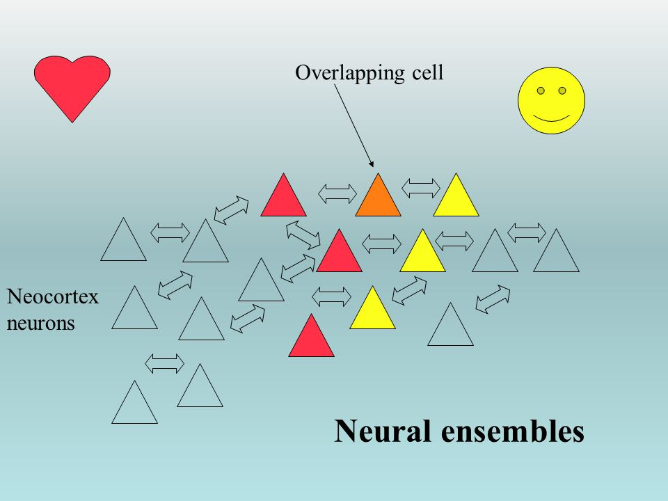 Overlapping cell Neocortex neurons Neural ensembles