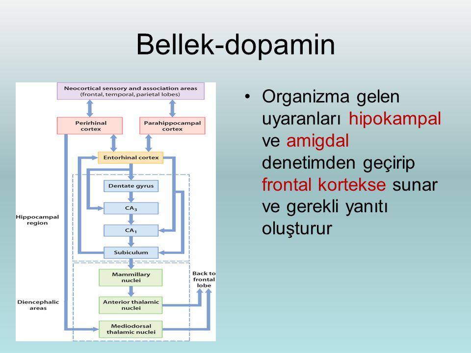 Bellek-dopamin Organizma gelen uyaranları hipokampal ve amigdal denetimden geçirip frontal kortekse sunar ve gerekli yanıtı oluşturur.