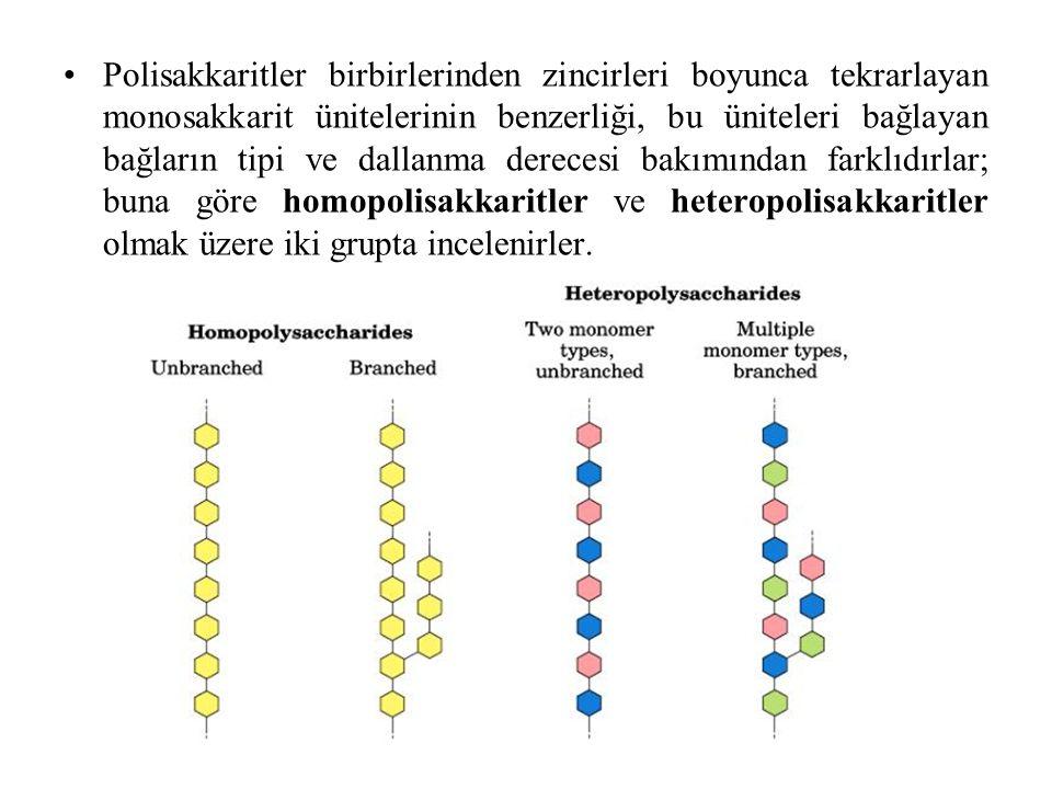 Polisakkaritler birbirlerinden zincirleri boyunca tekrarlayan monosakkarit ünitelerinin benzerliği, bu üniteleri bağlayan bağların tipi ve dallanma derecesi bakımından farklıdırlar; buna göre homopolisakkaritler ve heteropolisakkaritler olmak üzere iki grupta incelenirler.