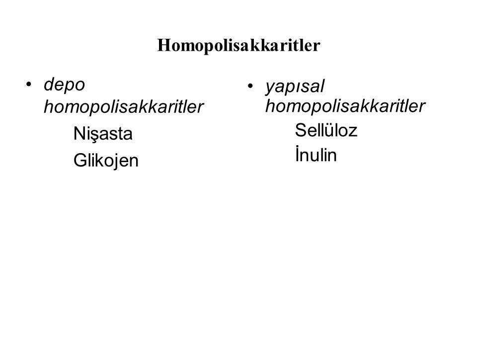 Homopolisakkaritler depo homopolisakkaritler. Nişasta. Glikojen. yapısal homopolisakkaritler. Sellüloz.