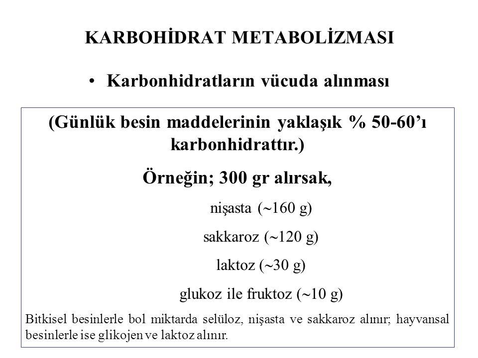 KARBOHİDRAT METABOLİZMASI