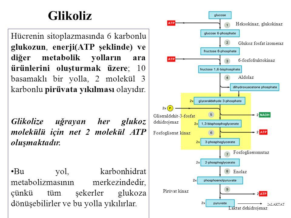 Glikoliz Heksokinaz, glukokinaz. Glukoz fosfat izomeraz. 6-fosfofruktokinaz. Aldolaz. Gliseraldehit-3-fosfat dehidrojenaz.