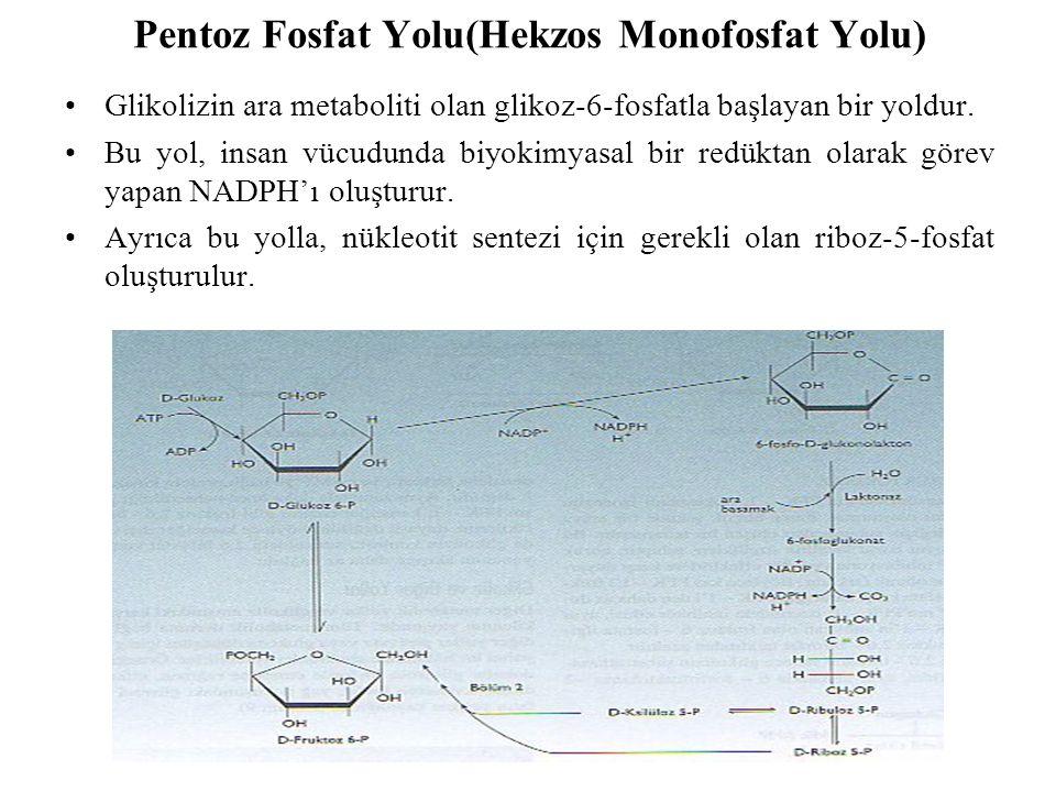 Pentoz Fosfat Yolu(Hekzos Monofosfat Yolu)