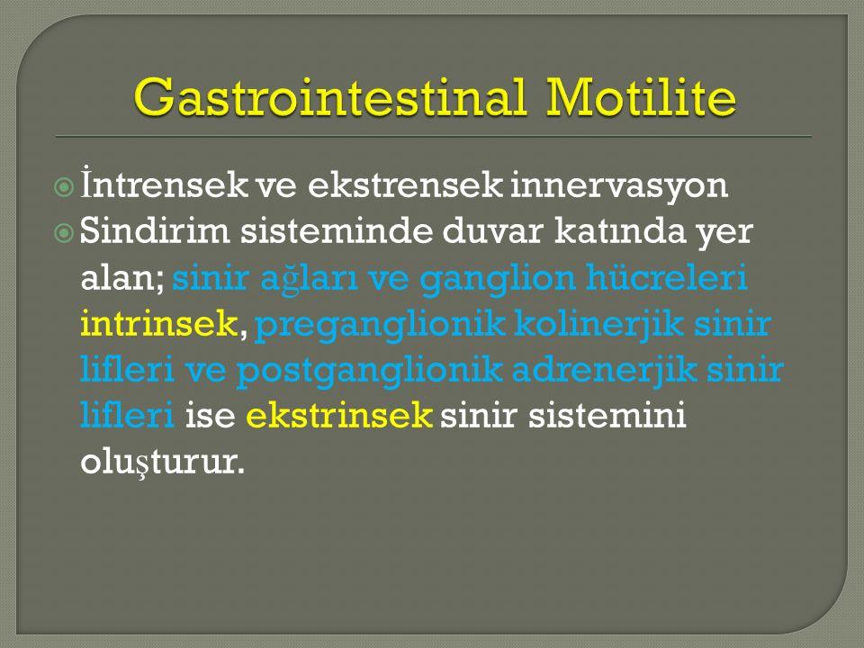 Gastrointestinal Motilite