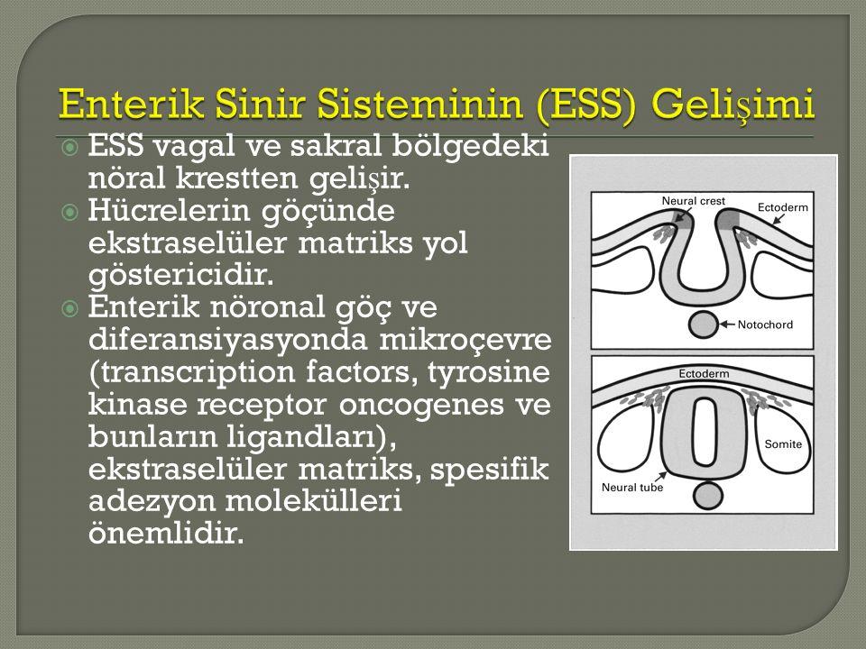 Enterik Sinir Sisteminin (ESS) Gelişimi