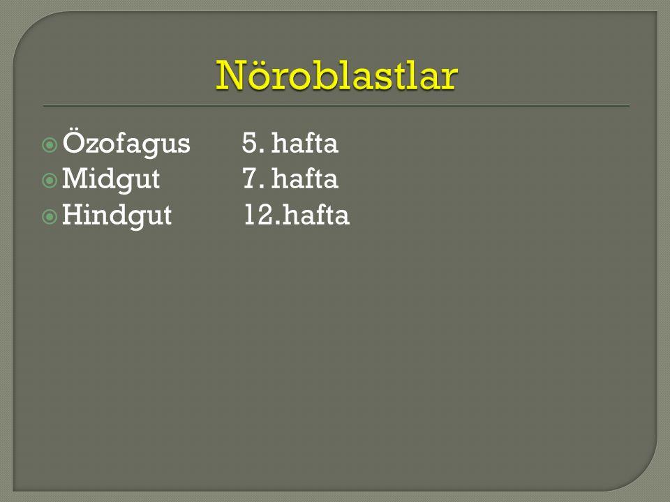Nöroblastlar Özofagus 5. hafta Midgut 7. hafta Hindgut 12.hafta